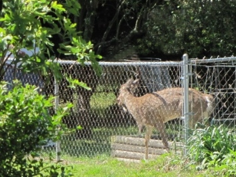 Keep Deer, Birds, Cats, Dogs, Or Rabbits Out Of The Garden