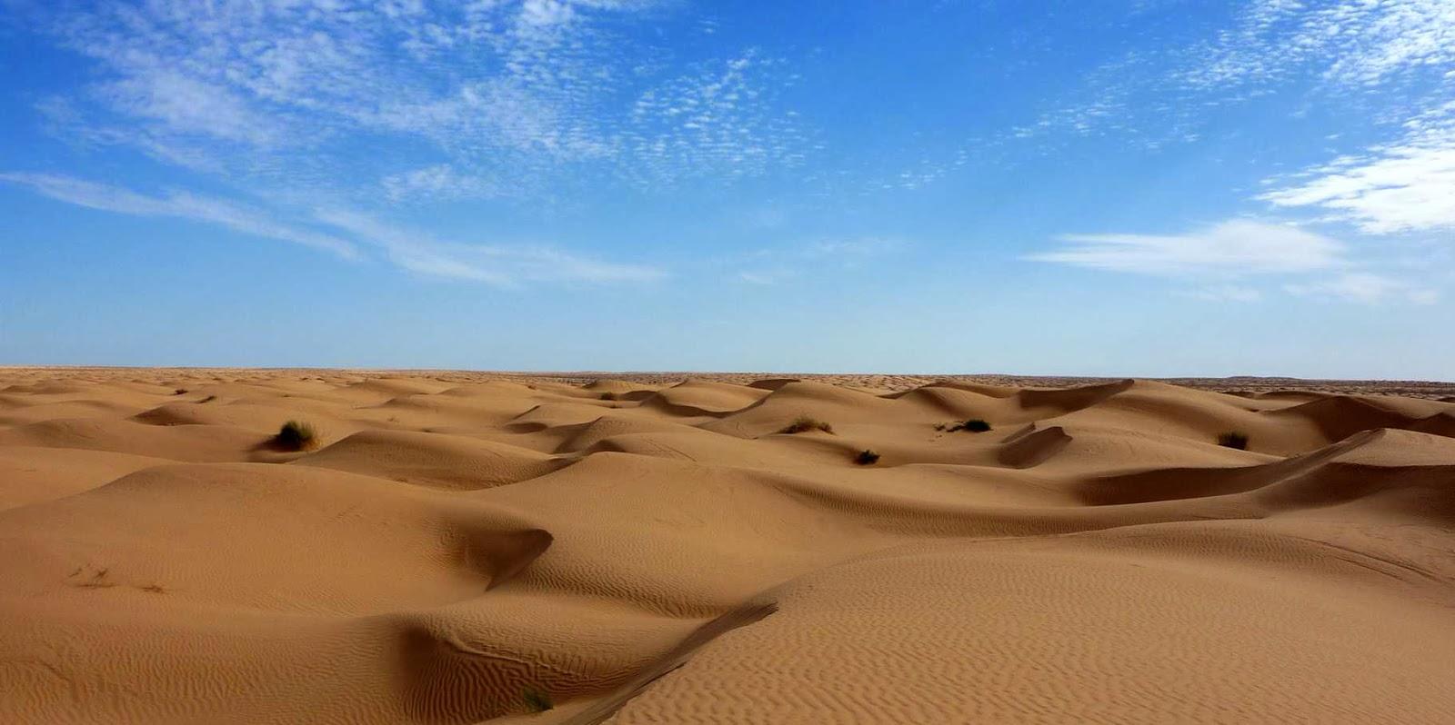 La selva ecuatorial y el desierto biolog a for Jardin del desierto