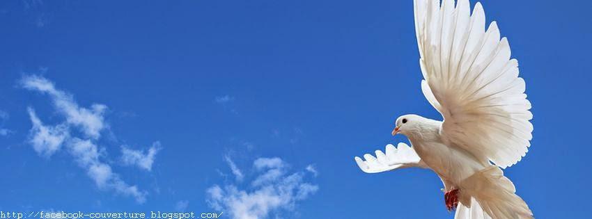 Couverture  pour facebook les colombes oiseaux