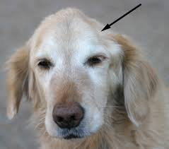 What Can Cause A Brain Tumor In A Dog