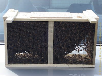 A package of 3lb of honey bees image