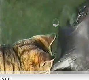 download vidio kucing ciuman lumba lumba youtube