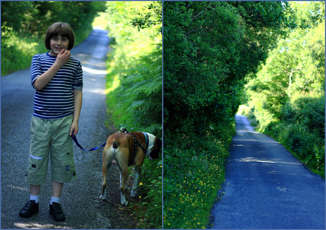 road, dog, boy, walking, flowers, summer,  Summer light © Annie Japaud Photography 2013