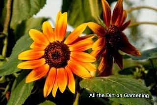 All the Dirt on Gardening