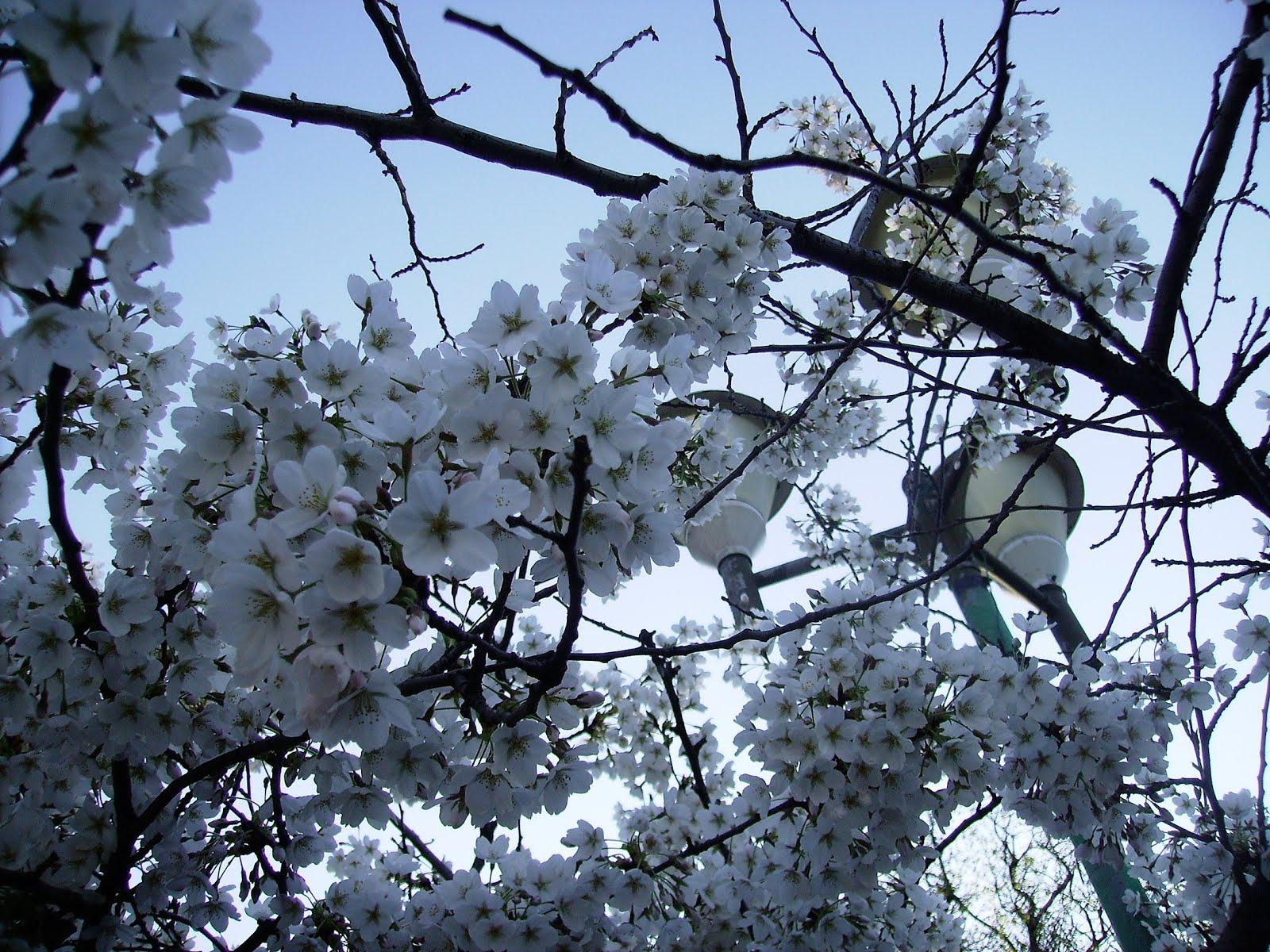 Springtime in April