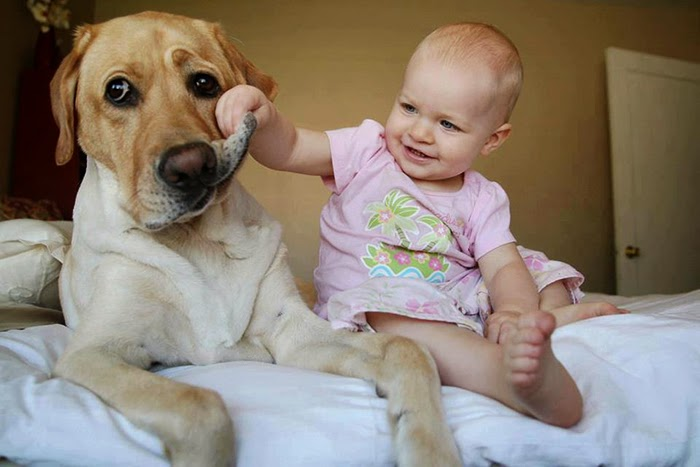 cute-big-dogs-and-babies-32.jpg