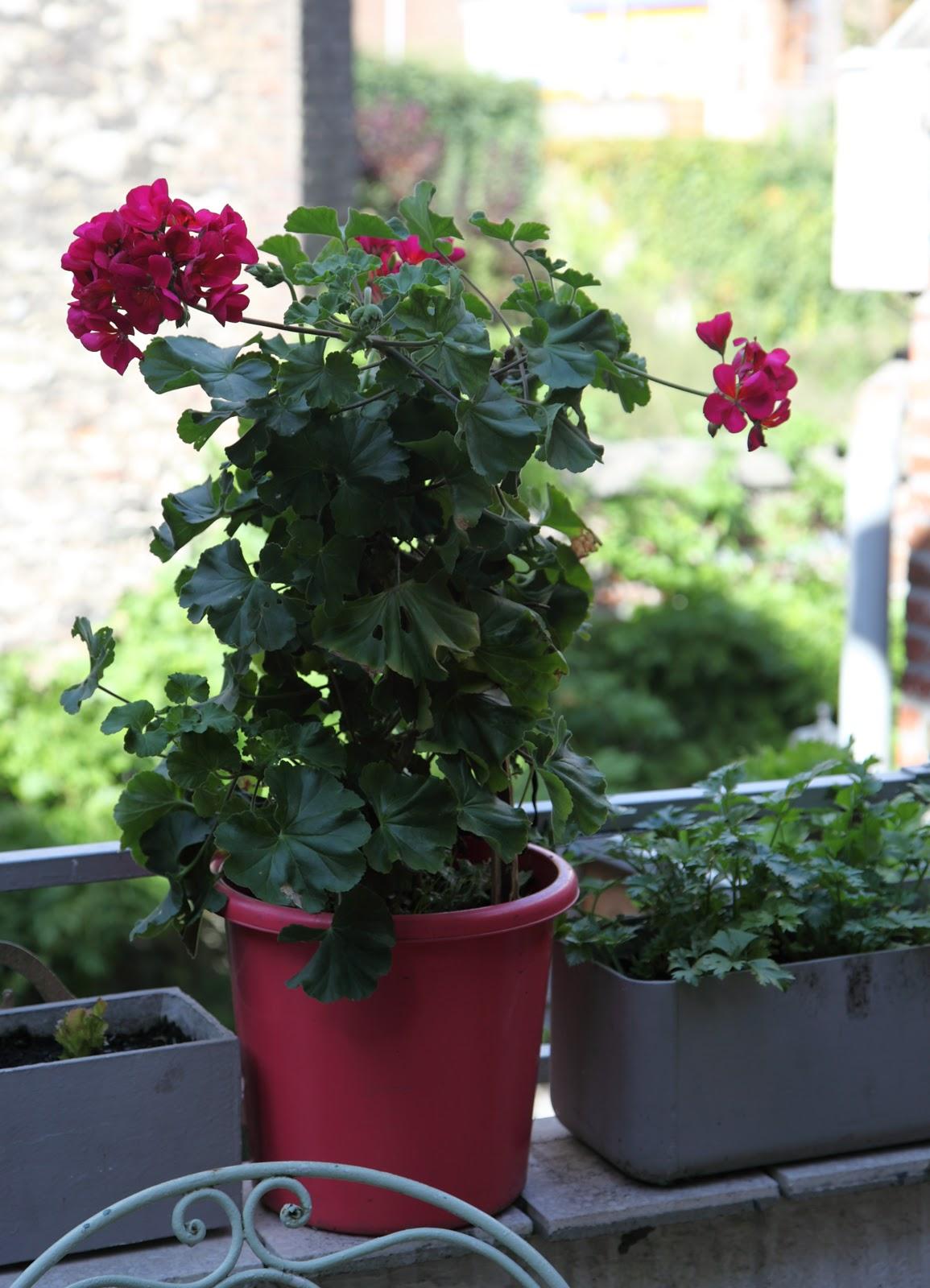Les petits papiers de nadezda mon jardin urbain - Semer du persil en jardiniere ...
