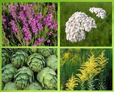 Gyógyító növények
