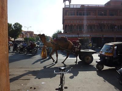 trafico-india-camello