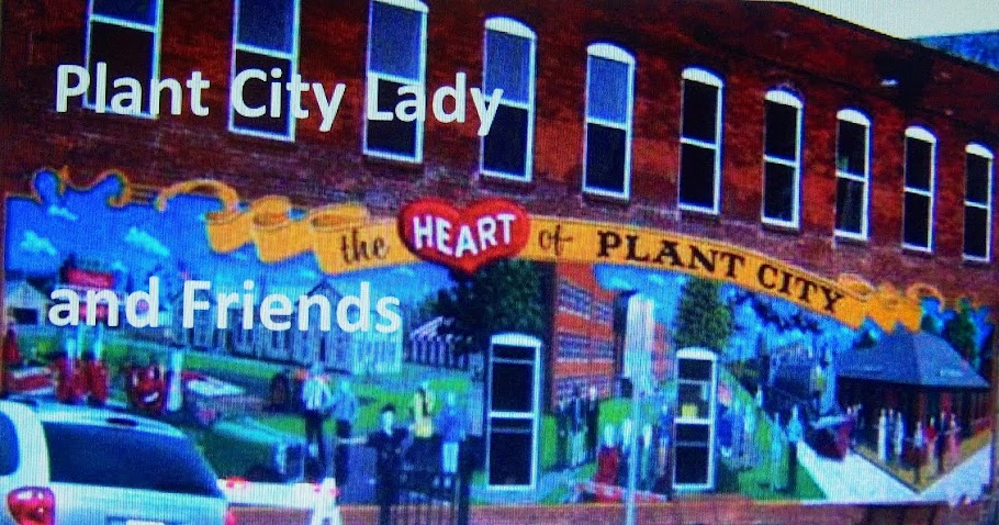Plant City Lady and Friends