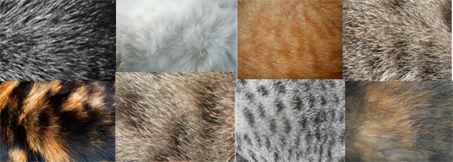 Collage of 7 different cat coat colors