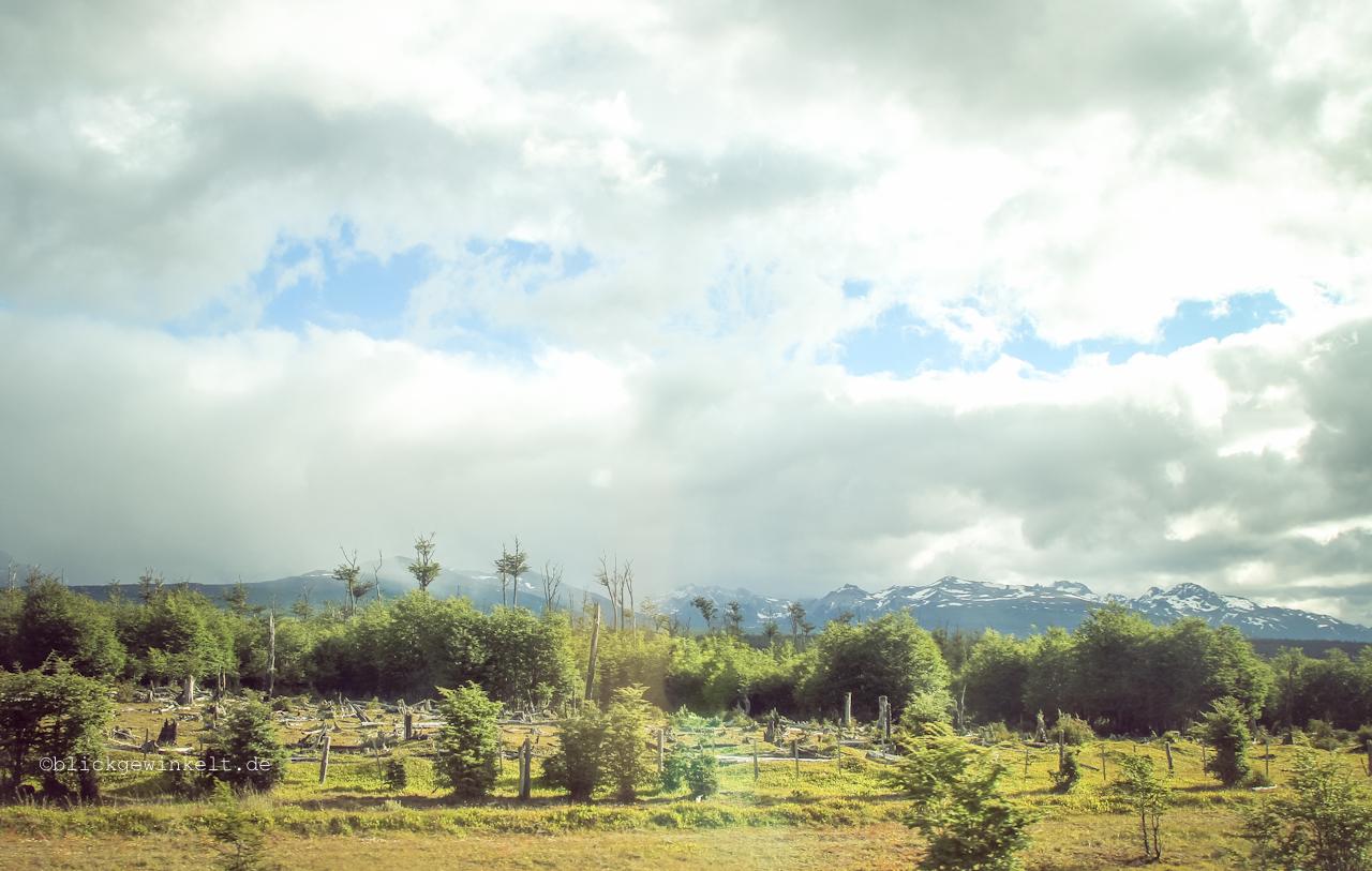 Abholzungsgebiet in Feuerland