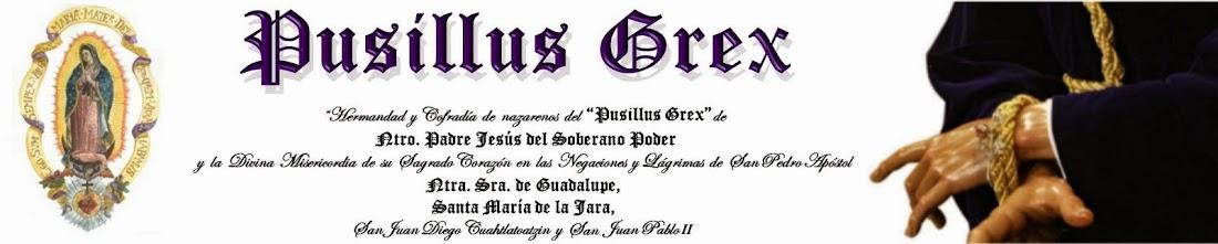 Pusillus Grex