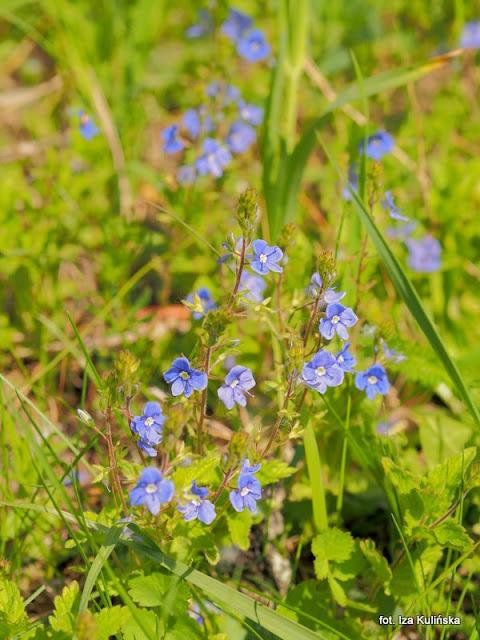 kwiaty, łąka, spacer