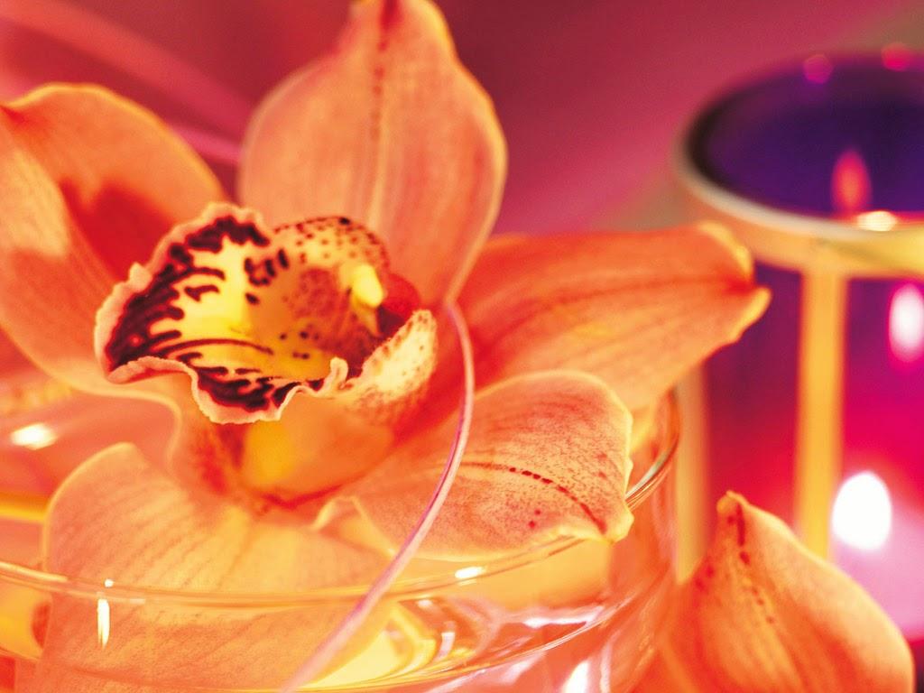Hoa phong lan rừng tự nhiên đẹp nhất