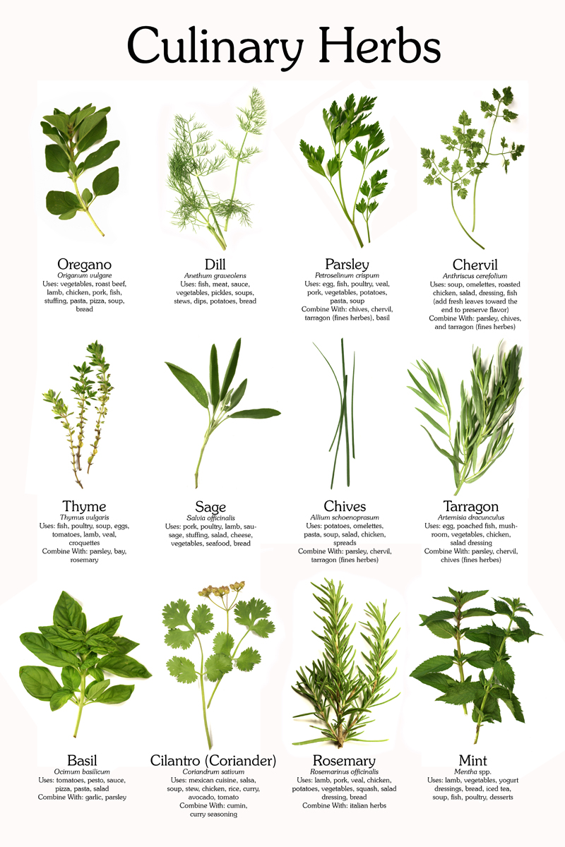 Culinary Herb Chart on Gardening Kids Planting Seeds Free Printable