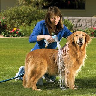 Tắm cho chó. Ảnh minh họa.