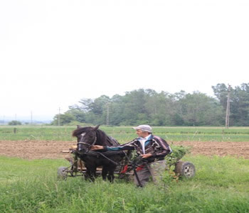 historia de elisandro e cavalo risonho