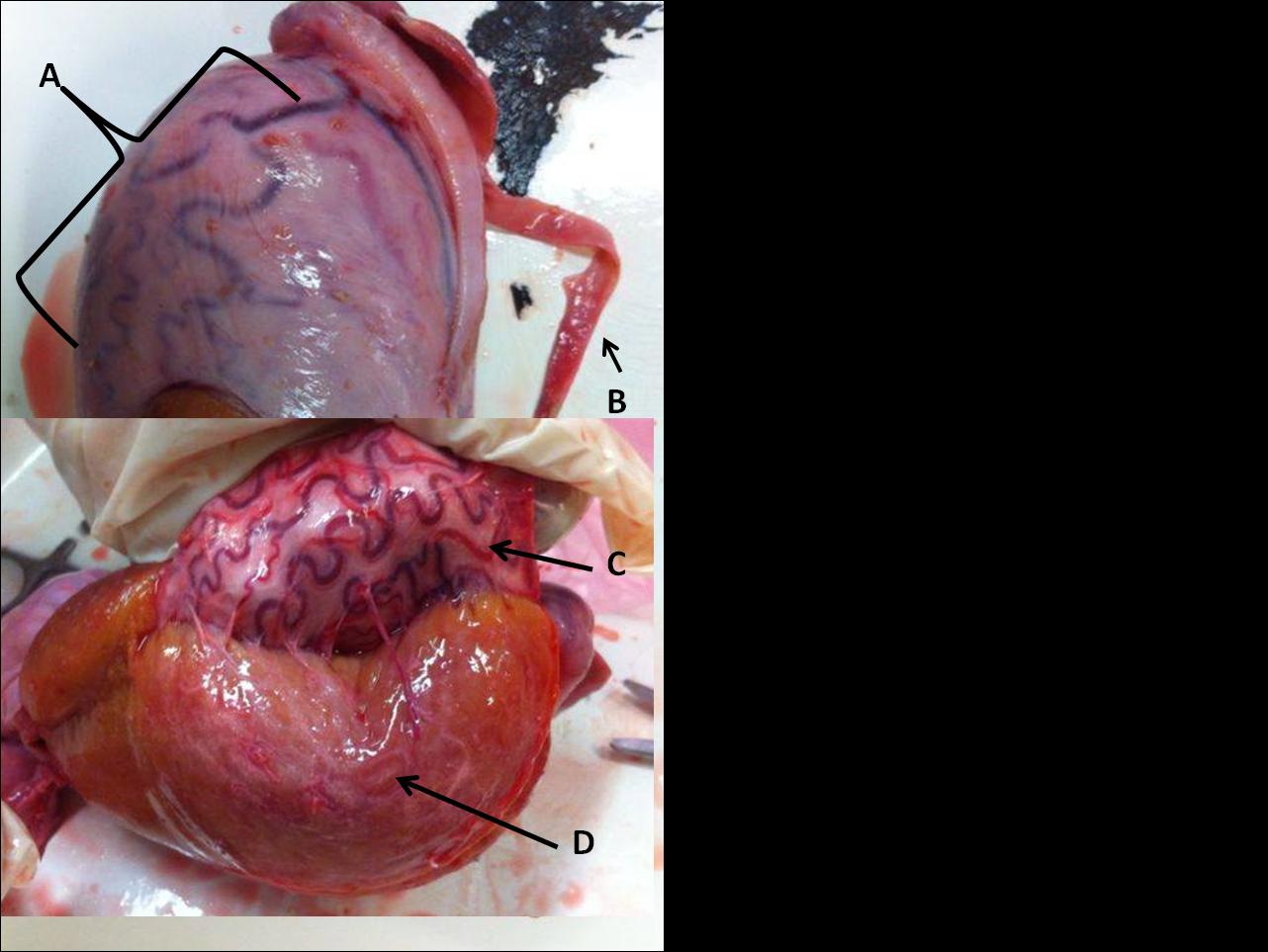 El Ovario Encantado: agosto 2014
