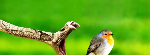 guzel kus facebook kapak resimleri+%252814%2529 35 En Güzel Facebook Kuş Kapak Resimleri indir