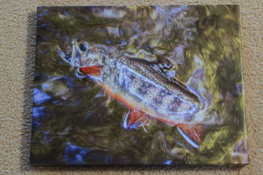 Brook Trout Picture for Christmas Giveaway