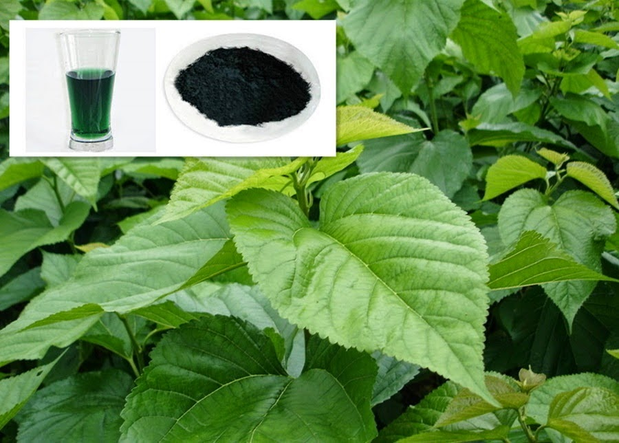 Sodium-Magnesium-Chlorophyllin-daun cawi-mencegah kanker-085743931646