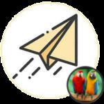flybirdmarketing