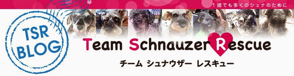 TSR Team Schnauzer Rescure Blog