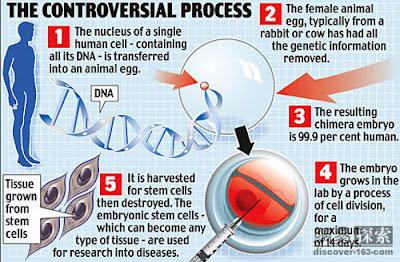 人獸混雜胚胎 155 個 (英科學家造出155個人獸混雜胚胎)