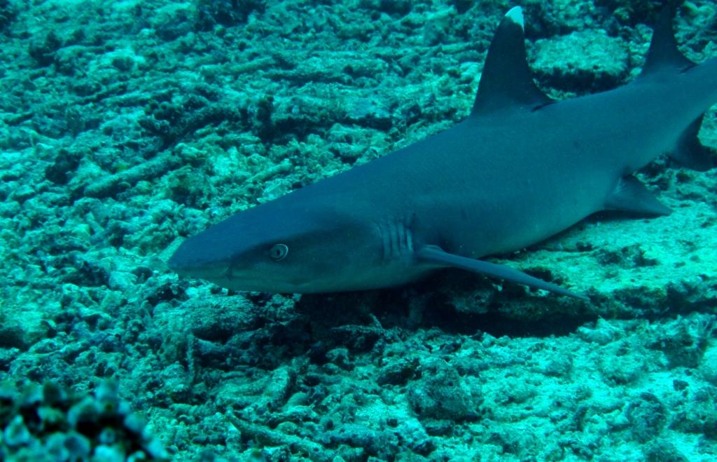 Scuba diving in malaysia top 10 dive sites at sipadan - Sipadan dive sites ...