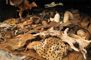 Abomey Benin Pasar Sihir Di Dunia