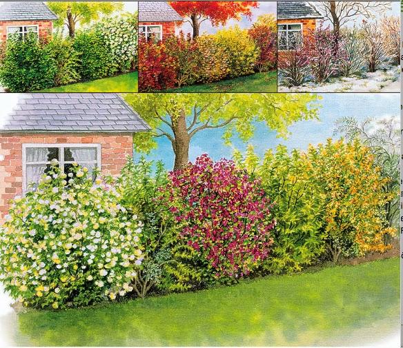 Le siepi miste il fascino della varieta 39 sfumature verdi for Siepi artificiali per balconi