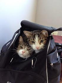 Queremos andar pelo mundo com mamãe e papai !
