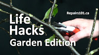 using secateurs to prune stems