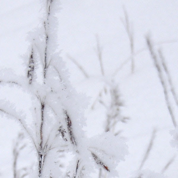 Snow Crystals in A Snowy Haze - Snow Photograph