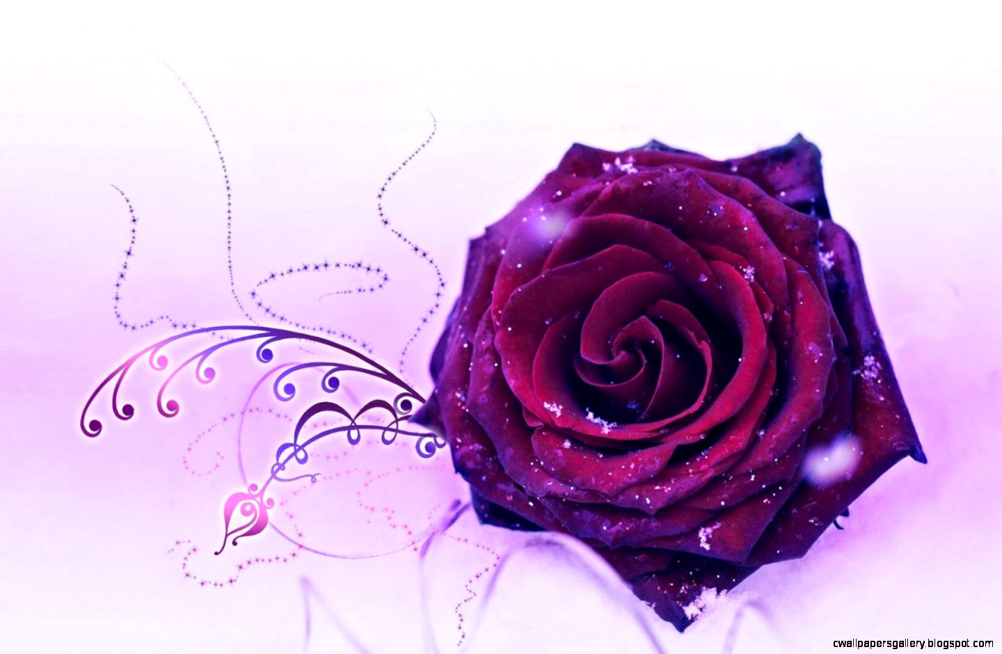 Purple Rose Wallpapers   keywords HERE