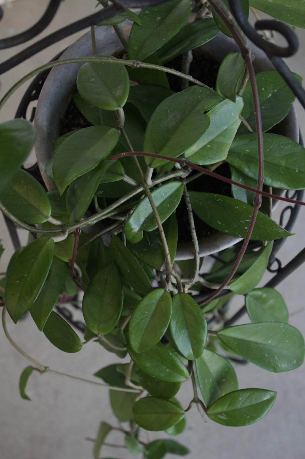 With a grateful prayer and a thankful heart my favorite 5 guest post houseplants - House plants vines ...