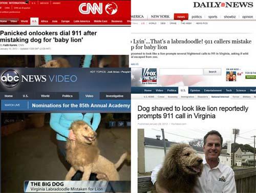Cão faz sucesso na web depois de ser confundido com leão