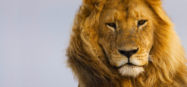 Forgive My Ignorance: Who Cares About Cecil The Lion.