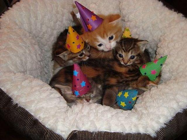 Kittens Wearing Party Hats Kitten-party-hats.jpg