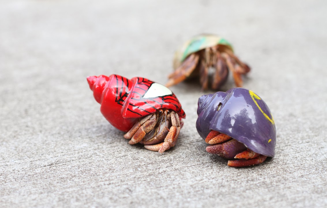 hermit crabs Product features hermit crabs are interesting creatures and kids are fascinated by them.