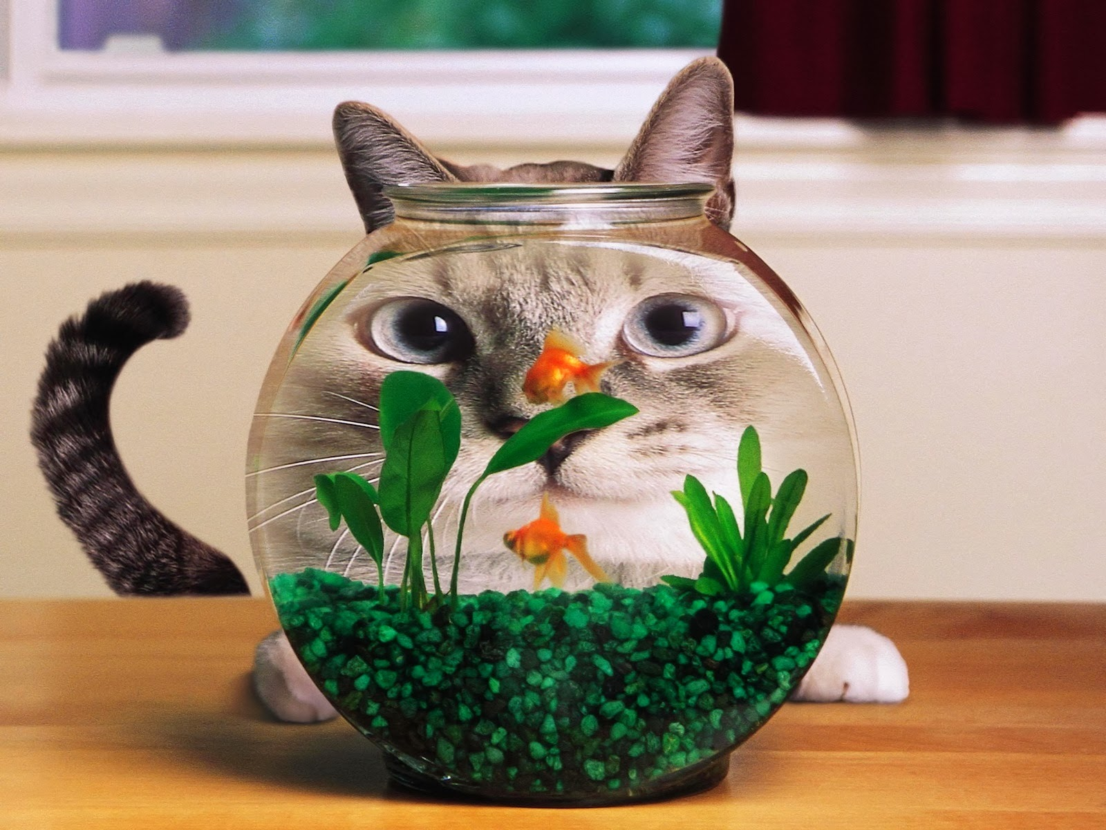 Wallpaper 3D gato tras la pecera