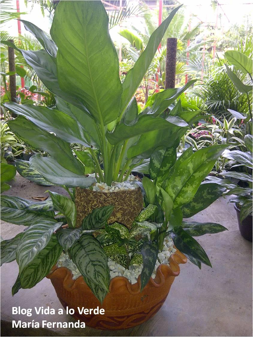Vida a lo verde living in green qu plantas usar para for Cuales son las plantas para interiores