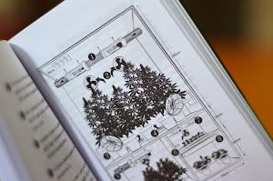 Como cultivar maconha medicinal?
