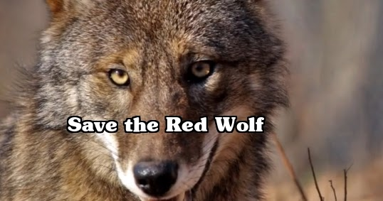 White Wolf : Save the ...