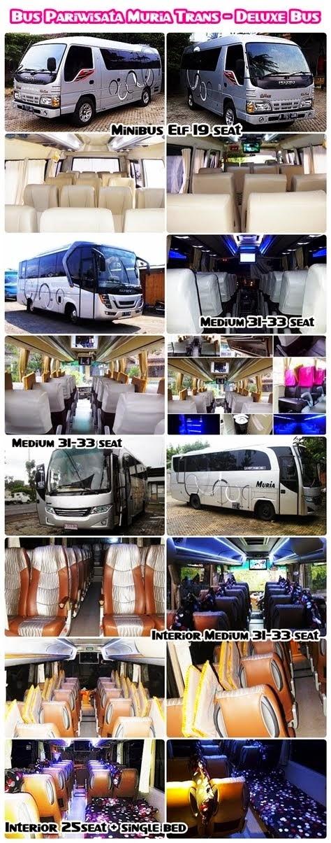 Minibus - Medium Bus Muria Trans