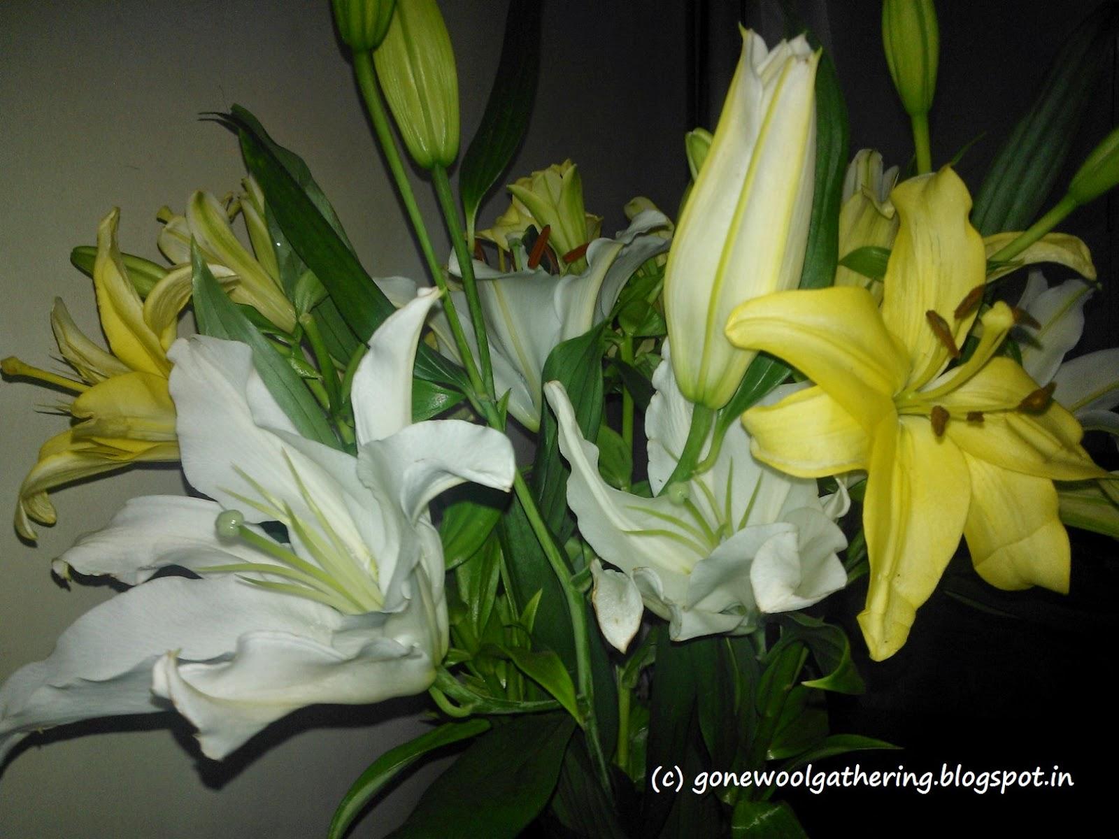 lilies, gonewoolgathering.blogspot.in