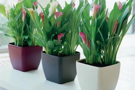 Arte y jardiner a plantas de interior un rinc n de la - Macetas para pared ...