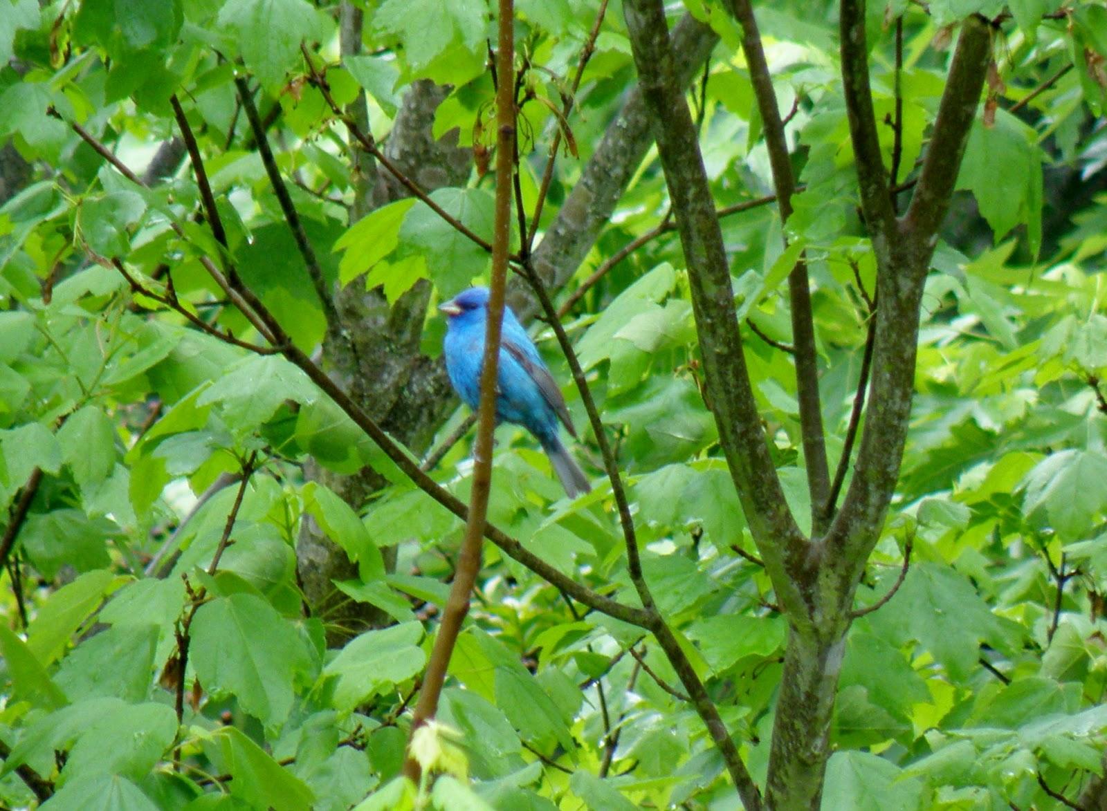 my carolina yard gardening for birds u0026 other wildlife