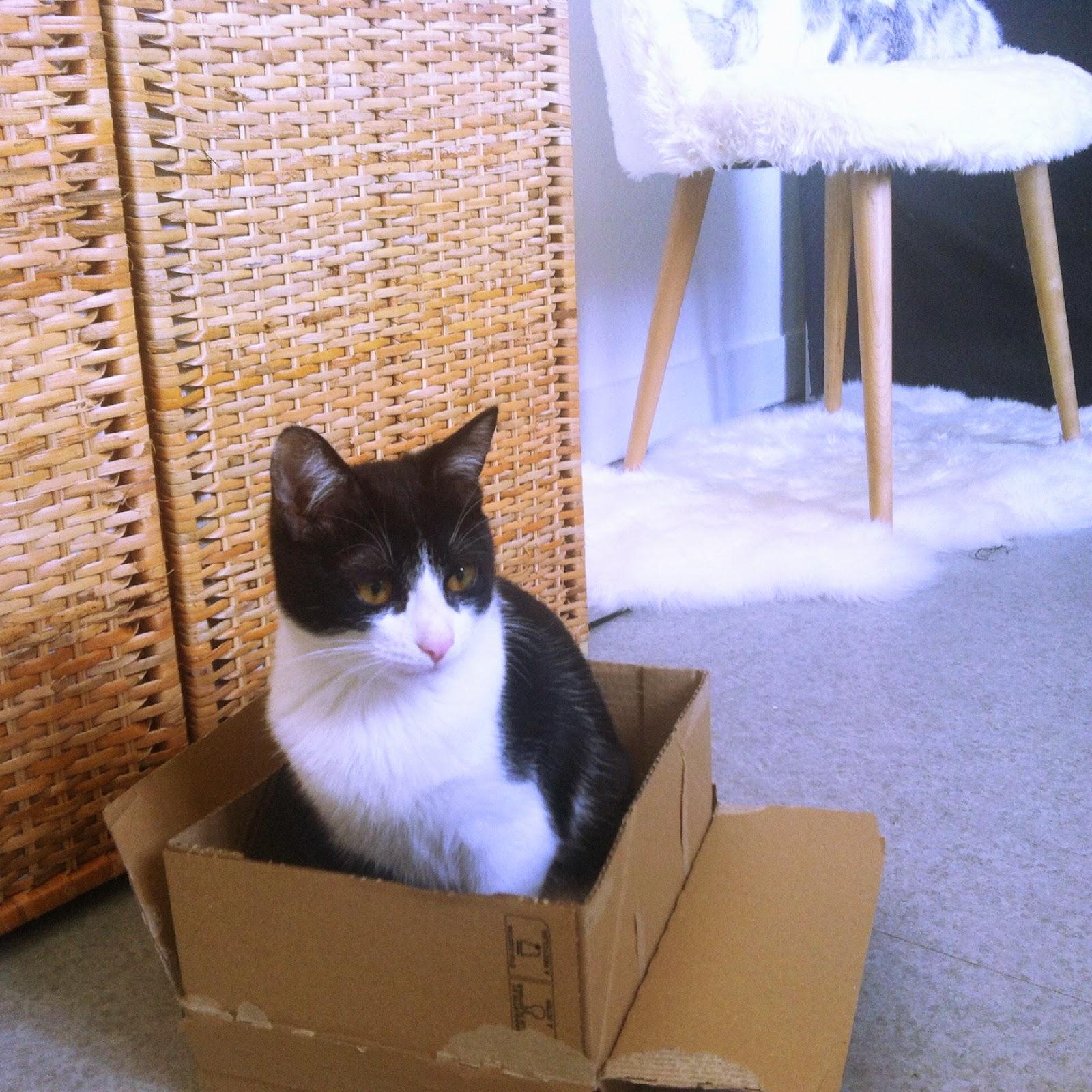 chat dans son carton
